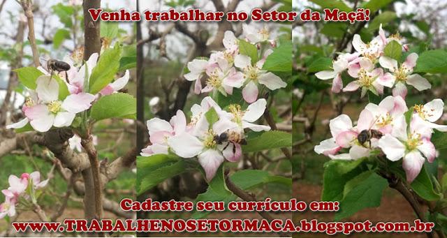 https://trabalhenosetormaca.blogspot.com.br/